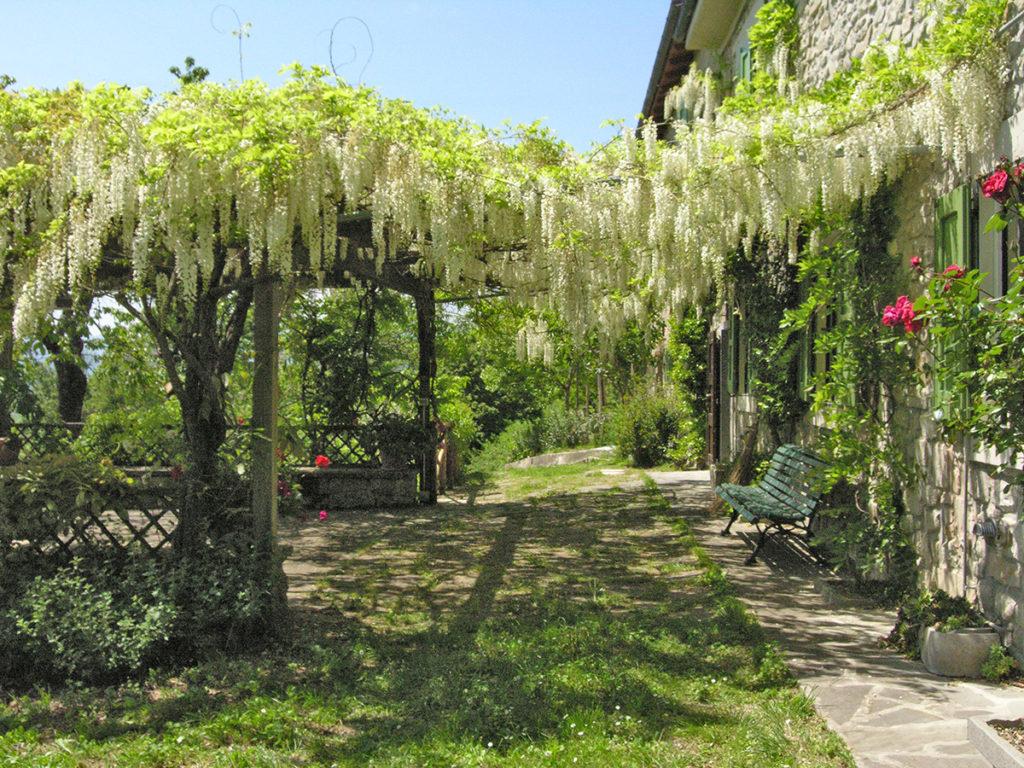Glicine - Casa privata - Modena