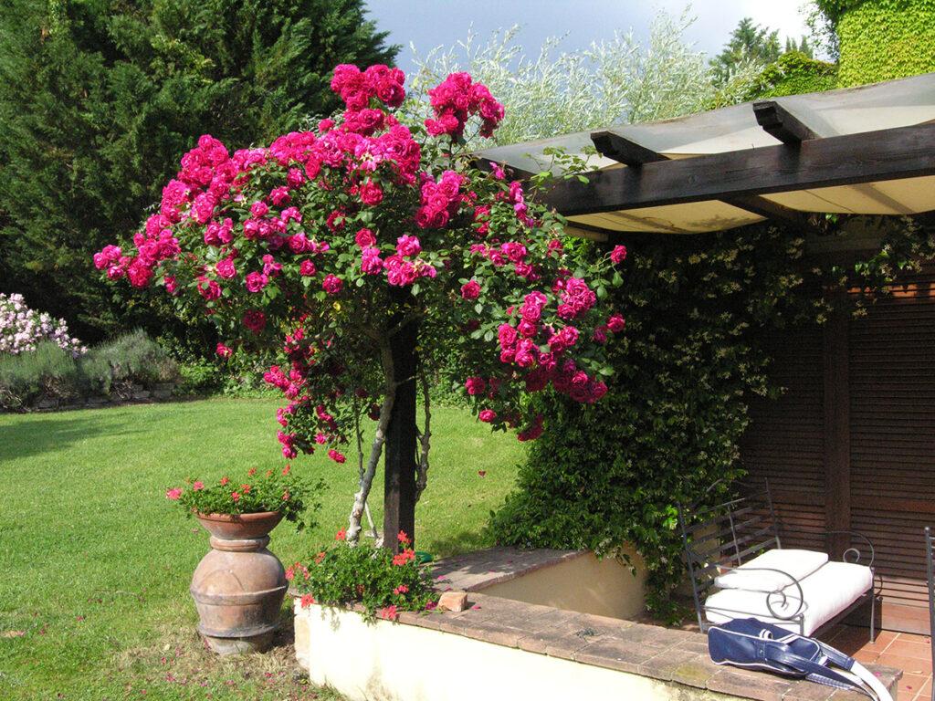 Giardino Vera Luciani