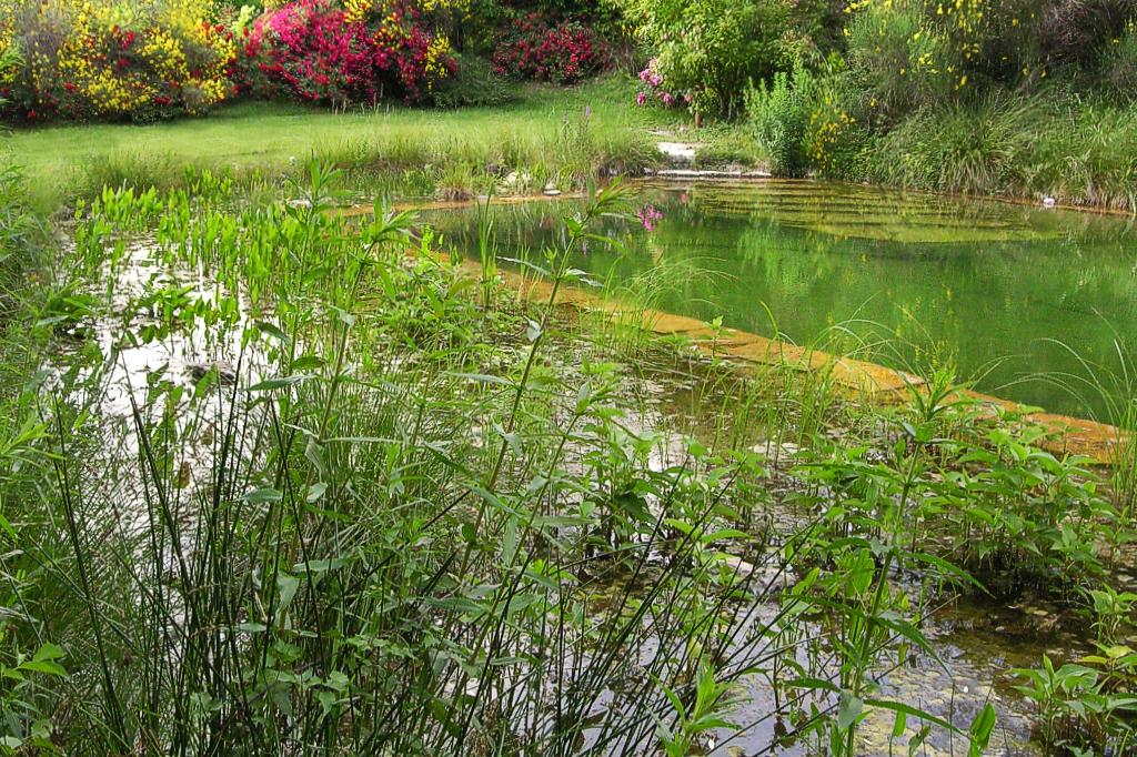 Biolago, piscina naturale Bardeggiano (SI)